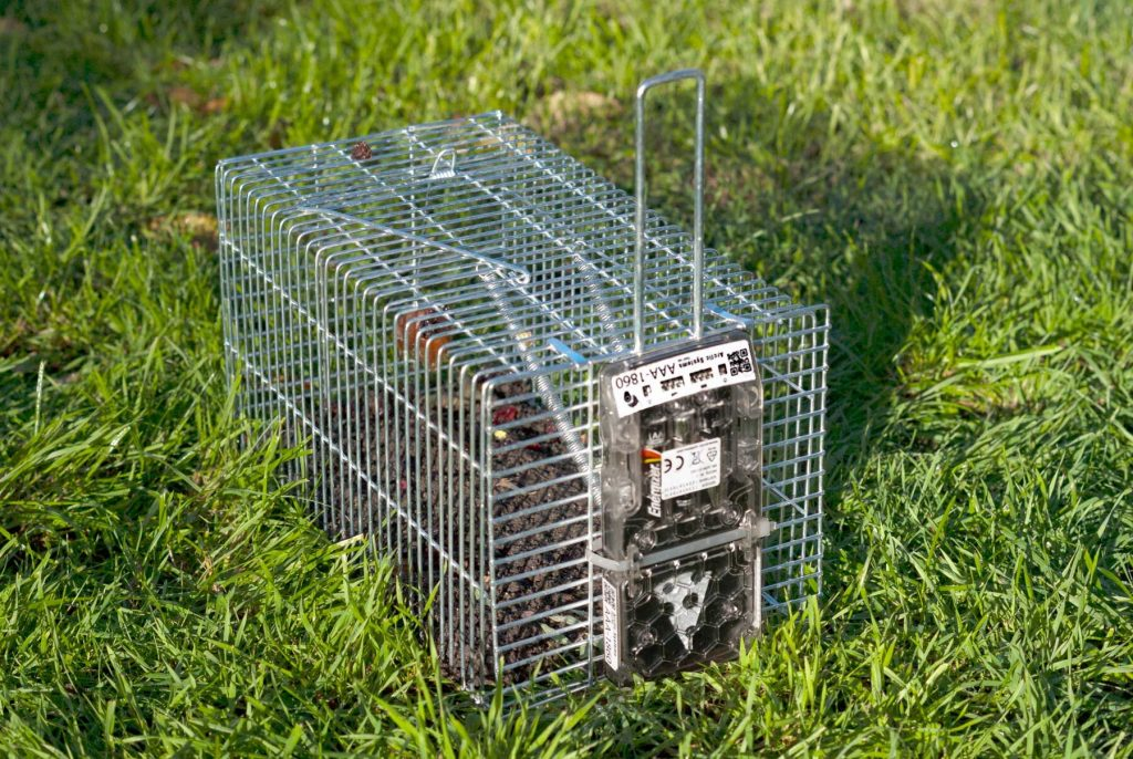 RATMO Digital rodent control device on cage trap