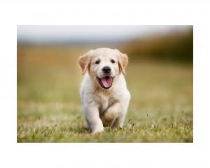 Secondary poisoning dog